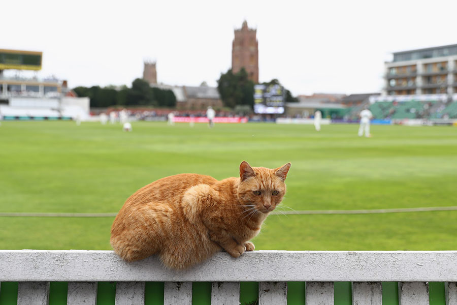 brian-the-somerset-club-cat-gets-set-for-the-days-play-somerset-v-nottinghamshire-county-championship-division-one-taunton-1st-day-september-20-2016